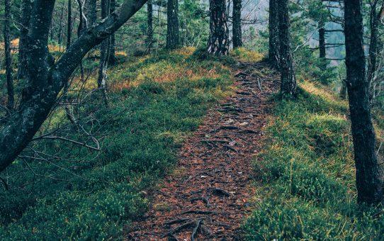 Healing Path